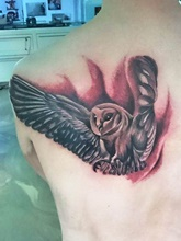 black-and-gray-owl-realistisch-article-thumb