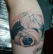 Portret hond op onderbeen