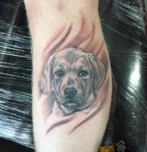 Puppy op onderbeen